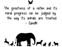 the-greatness-of-a-nation-and-its-moral-progress-can-be-judged-by-the-way-its-animals-are-treated-world-animal-day