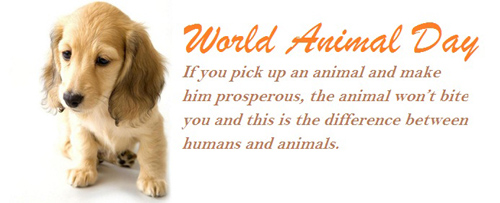 world-animal-day-essay