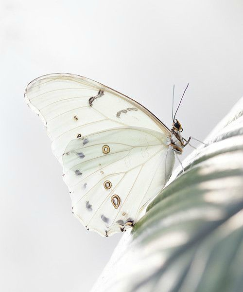 Her Wings….