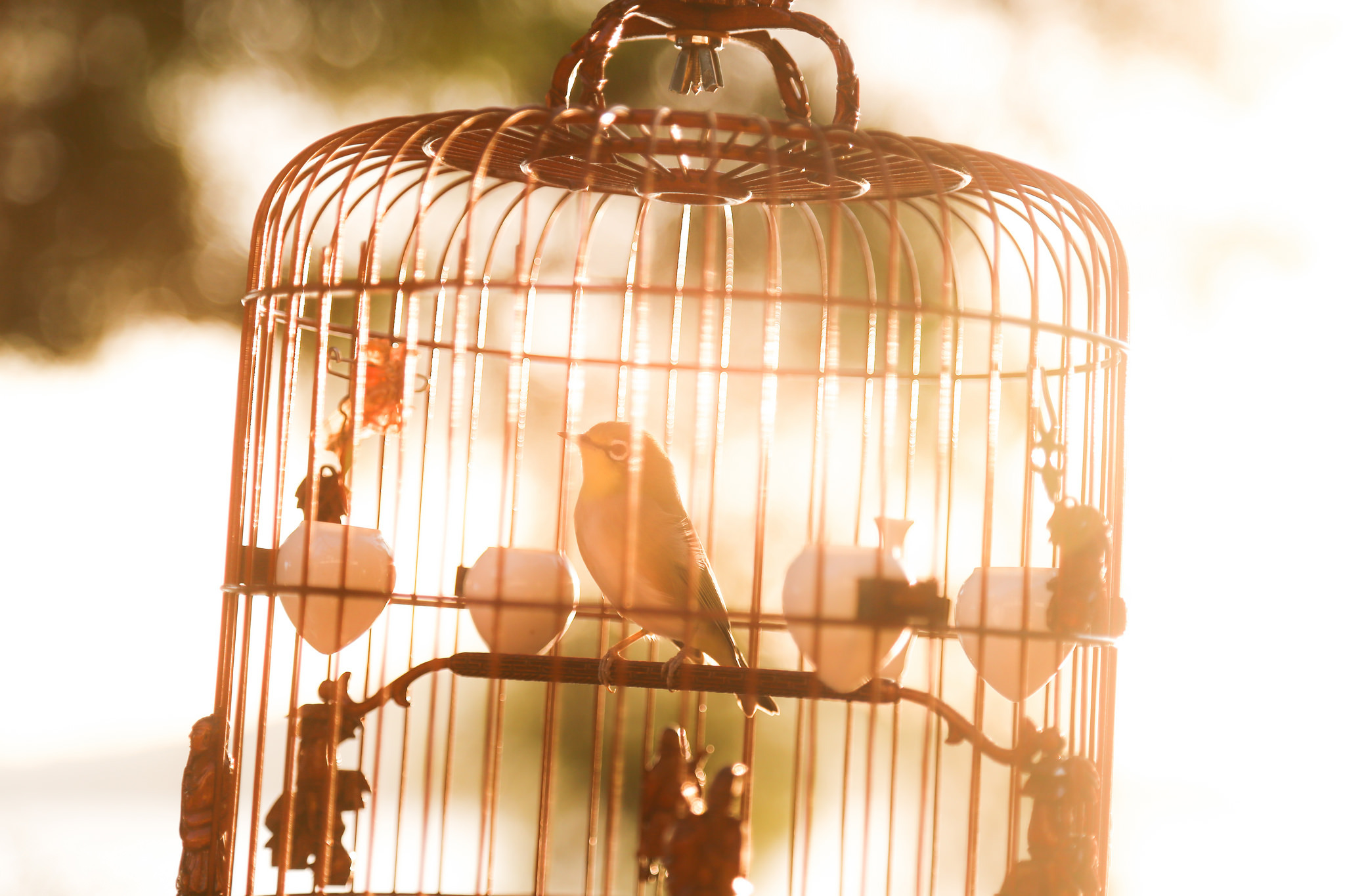 BIRD IN THE GOLDEN CAGE